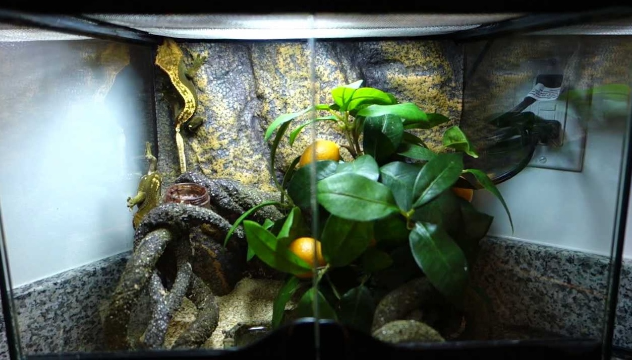 Tank for Leopard and Crested Gecko
